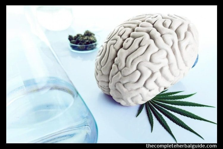 Marijuana and 'Spice' Could Trigger Seizures, Study Says
